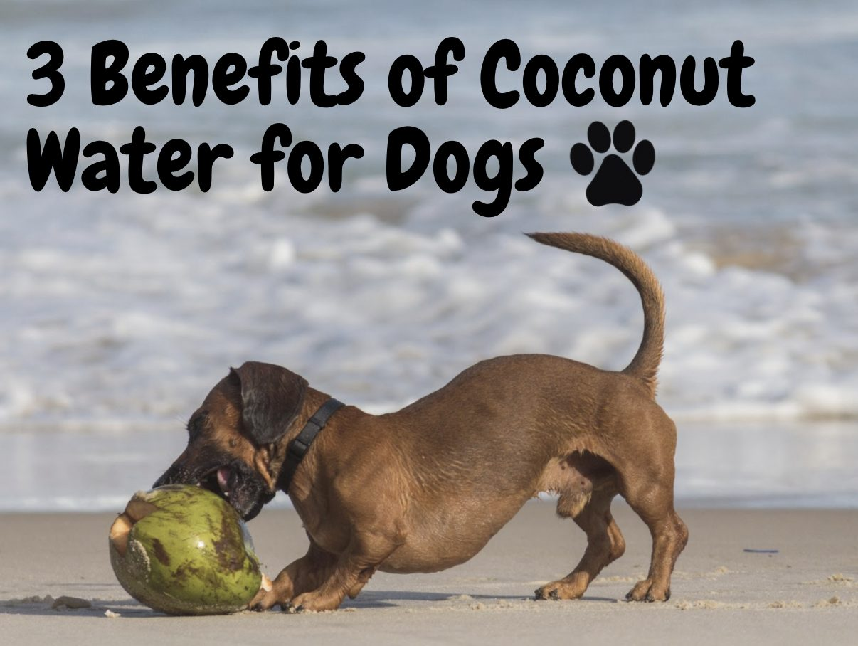 3 Coconut Water Benefits for your Pups